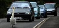 4 самых медленных автомобиля на вторичном рынке